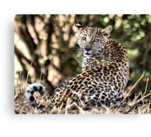 THE LEOPARD - Panthera pardus - Luiperd Canvas Print