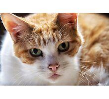 Cat's eyes Photographic Print