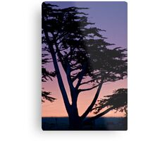 Tree at sunset- Cambria Metal Print