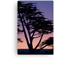 Tree at sunset- Cambria Canvas Print