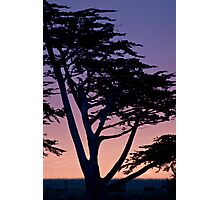 Tree at sunset- Cambria Photographic Print