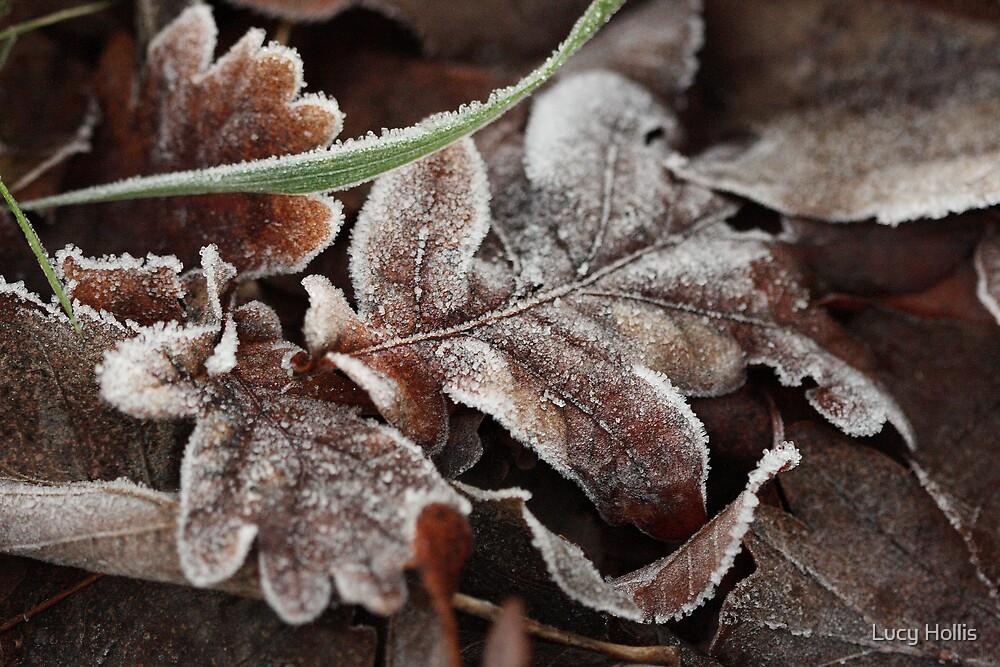 Winter Oak Leaf by Lucy Hollis