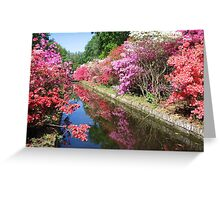 Colorful Keukenhof Greeting Card