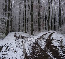 """Two roads diverged in a silver wood,"" der Schwarzwald, Germany 2008 by J.D. Grubb"
