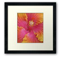 Sweet Hibiscus Framed Print