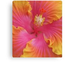 Sweet Hibiscus Canvas Print