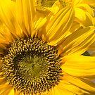 Sunflowers by Brendan Schoon