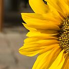 Welcome to the Sunflower by Brendan Schoon