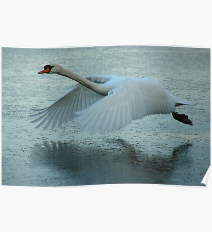 Flying Swan Poster