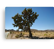 Joshua Tree National Park, Big Joshua Canvas Print