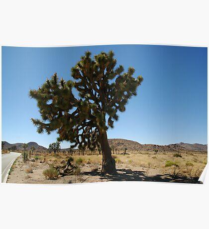 Joshua Tree National Park, Big Joshua Poster
