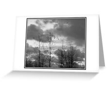 As the crow flies in black and white Greeting Card