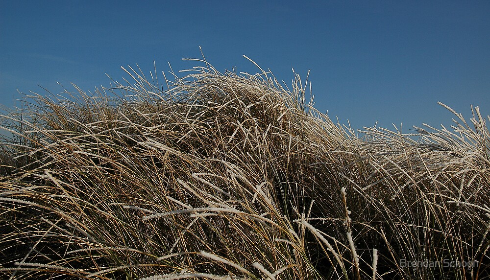 Frozen Dune Grass by Brendan Schoon
