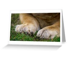 Chow dog paws Greeting Card