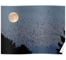 Moonlit Frenzy Poster