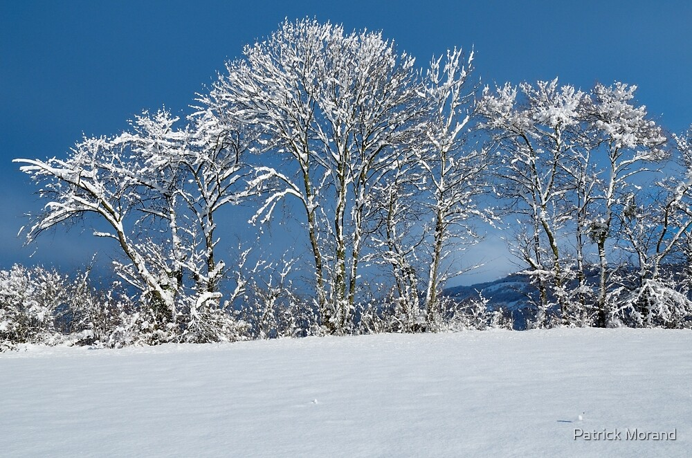 White trees and blue sky by Patrick Morand