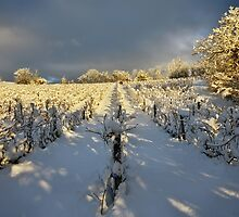 Snow and sun on the french vineyard by Patrick Morand