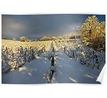Snow and sun on the french vineyard Poster