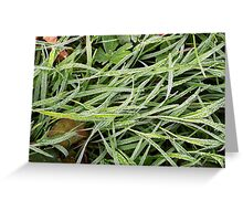 Frosted grass Greeting Card