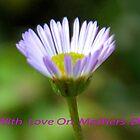 The Humble Daisy............ by lynn carter