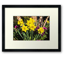 Sunny Daffodil Bouquet – Impressions Of Spring Framed Print