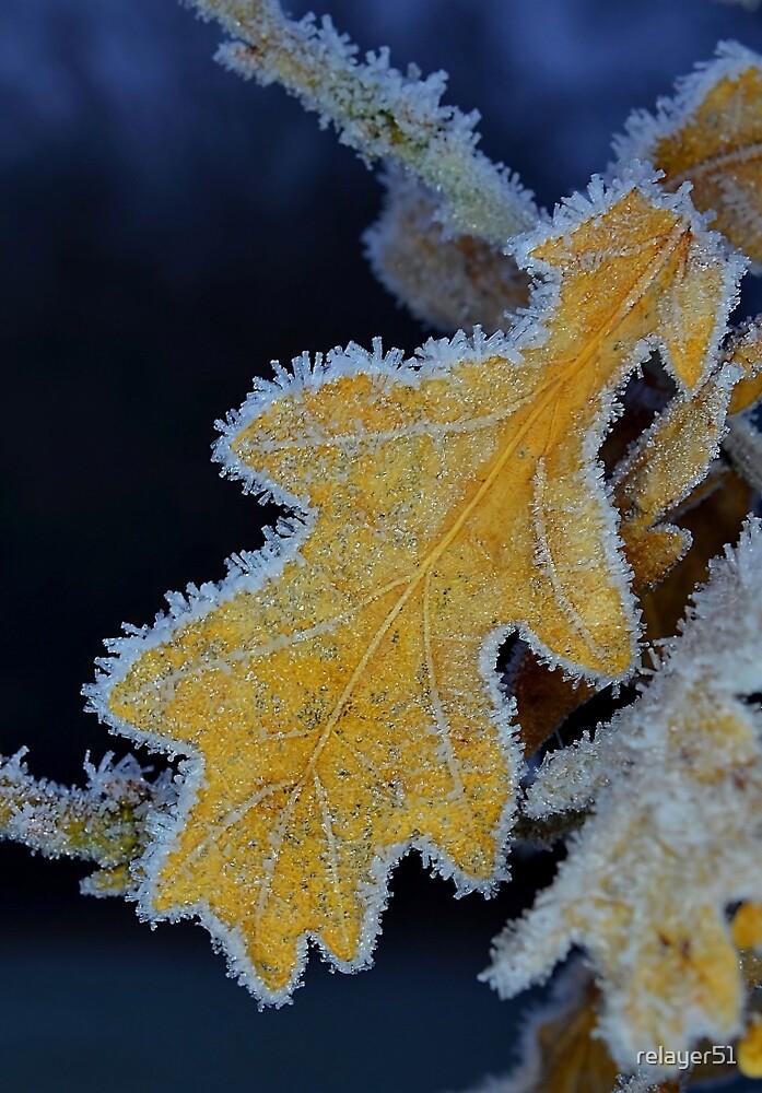 Frosty Leaf by relayer51