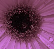 Lavender Flower by stacyrod