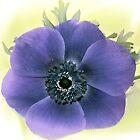 Purple Anemone............ by lynn carter