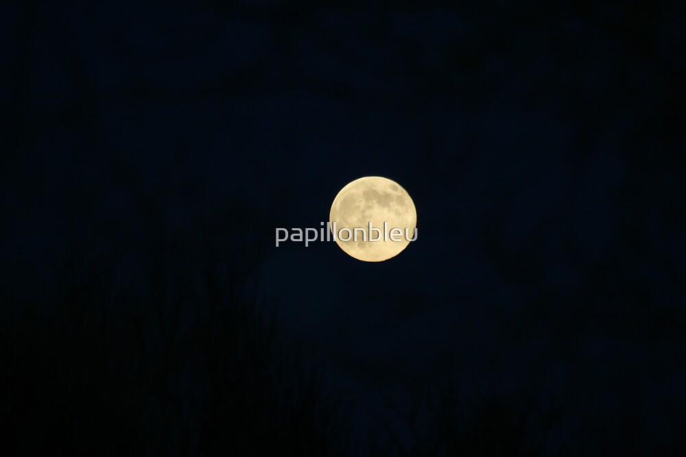 Moon So Bright on a Winters Night! by Pamela Jayne Smith