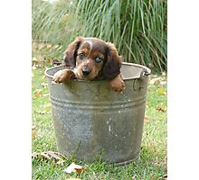 Bucket of trouble Photographic Print