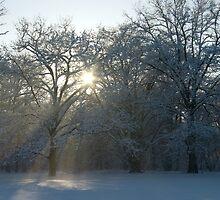 Enchanting Light 3 by steppeland