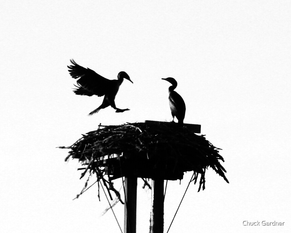 Cormorant Roost on Hwy 126  by Chuck Gardner