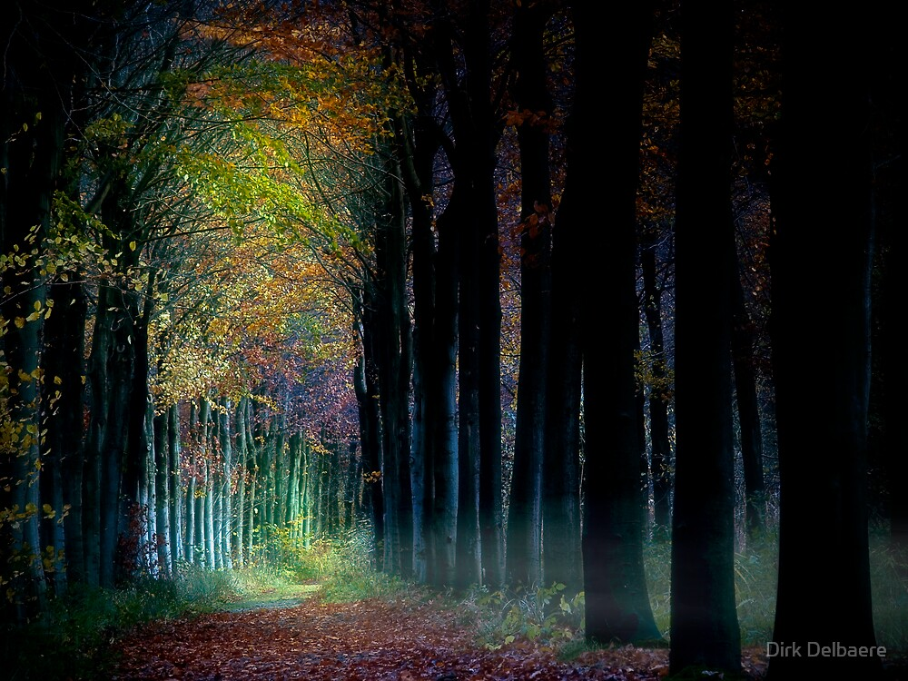 Trees by Dirk Delbaere