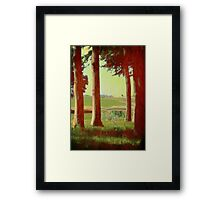Daisy's in the field Framed Print