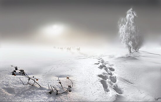 White Run by Igor Zenin