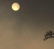Sun Worship by Anima Fotografie