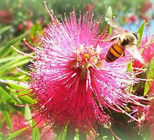 Bee and Red Bottle Brush by SpikeyRose