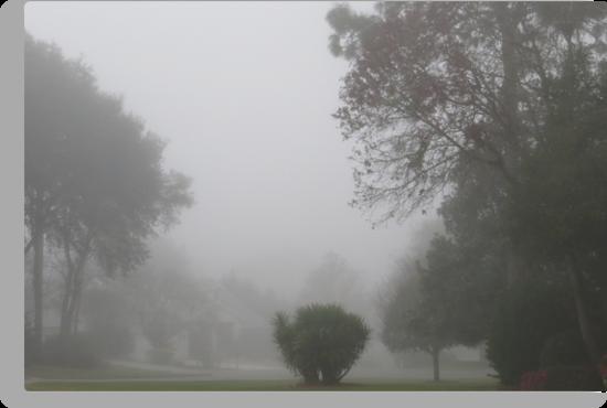 Foggy Morning by AuntDot