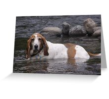 Time to cool off Greeting Card
