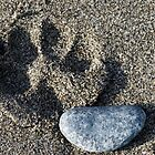 Paw Print in the sand by JWallace