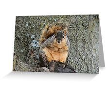 I'm not fat! This is winter fur! Greeting Card