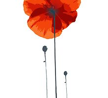 poppy coquelicot by LilaVert