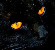 black cat by Jessica Karran