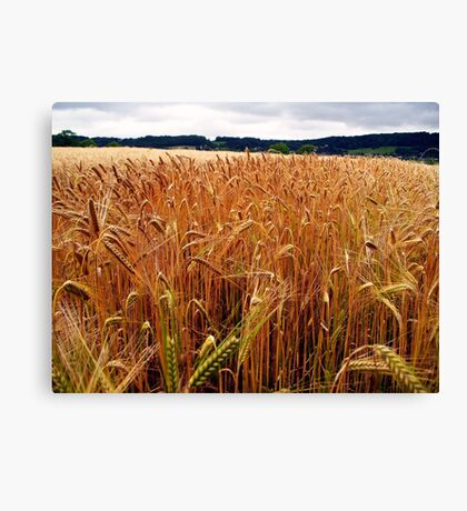 The Barleyfield in Nowhere Canvas Print
