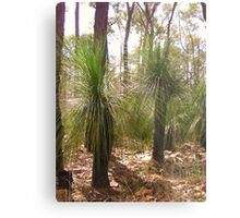 Outback Images Metal Print