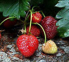 Strawberry by Ragamuffin