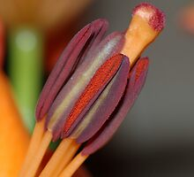 Orange and Red by Allan Saben