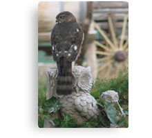 Merlin came to call Canvas Print