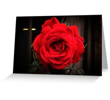 Camp David - Red Red Rose Greeting Card
