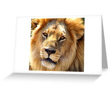 Male Lion up Close Greeting Card